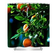 Florida Oranges Shower Curtain