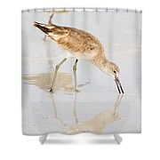 Florida Shorebirds - Willets In Their Summer Finery Shower Curtain