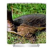 Florida Softshell Turtle Apalone Ferox Shower Curtain