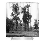 Florida Spanish Moss Shower Curtain