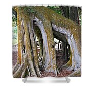 Florida Trees Shower Curtain