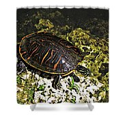 Florida Turtle Shower Curtain