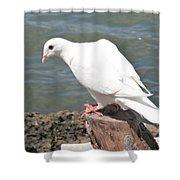 Florida White Pigeon Shower Curtain