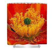 Flower 108 Shower Curtain
