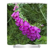 Flower 14 Shower Curtain