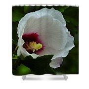 Flower 157 Shower Curtain