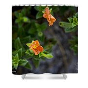 Flower 20 Shower Curtain