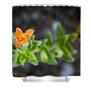 Flower 21 Shower Curtain