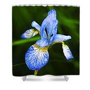Flower 237 Shower Curtain