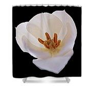 Flower 270 Shower Curtain