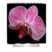 Flower 280 Shower Curtain