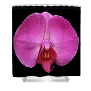 Flower 328 Shower Curtain