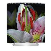 Flower  97 Shower Curtain