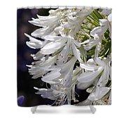 Flower-agapanthus-white-flora Shower Curtain