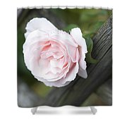 Flower Among The Fence Shower Curtain