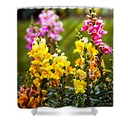 Flower - Antirrhinum - Grace Shower Curtain by Mike Savad