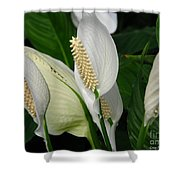 Flower Art Shower Curtain