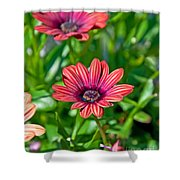 Flower Astra Outback Purple Art Prints Shower Curtain
