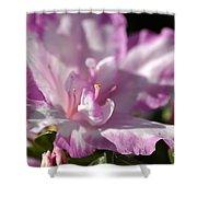 Flower--azalea-white-pink Shower Curtain