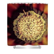 Flower Beauty Iv Shower Curtain by Marco Oliveira