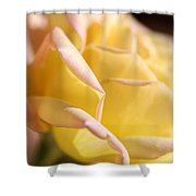 Flower-bright Yellow-rose With Pink Shower Curtain