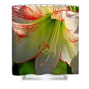 Flower Child Amaryllis Flower Art Shower Curtain