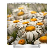 Flower - Daisy - Not Quite Fresh As A Daisy Shower Curtain