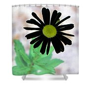 Flower - Daisy - Photopower 327 Shower Curtain