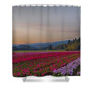 Flower Field At Sunset In A Standard Ratio Shower Curtain
