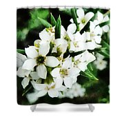 Flower Filled Dreams Shower Curtain