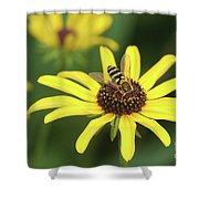 Flower Fly And Yellow Flowers Shower Curtain