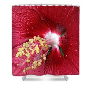 Flower Garden 16 Shower Curtain