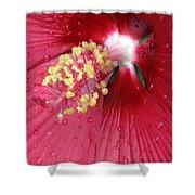 Flower Garden 17 Shower Curtain