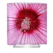 Flower Garden 19 Shower Curtain
