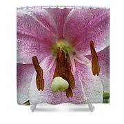 Flower Garden 21 Shower Curtain