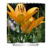 Flower Garden 22 Shower Curtain