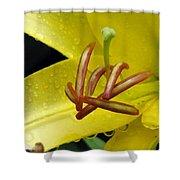 Flower Garden 28 Shower Curtain