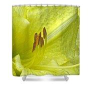 Flower Garden 33 Shower Curtain