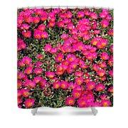 Flower Garden 39 Shower Curtain