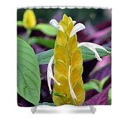 Flower Garden 52 Shower Curtain