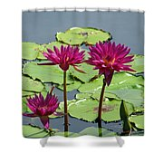 Flower Garden 57 Shower Curtain