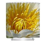 Flower Garden 68 Shower Curtain