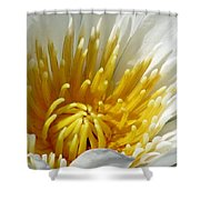 Flower Garden 69 Shower Curtain