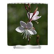 Flower-gaura-white  Shower Curtain