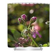 Flower-geranium Buds Shower Curtain