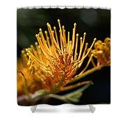 Flower-grevillea-australian Native Shower Curtain