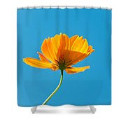 Flower - Growing Up In Brooklyn Shower Curtain