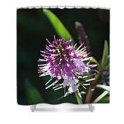 Flower-hebe  Shower Curtain