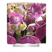 Flower-hydrangea Pink Shower Curtain