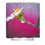Flower In Purple Shower Curtain